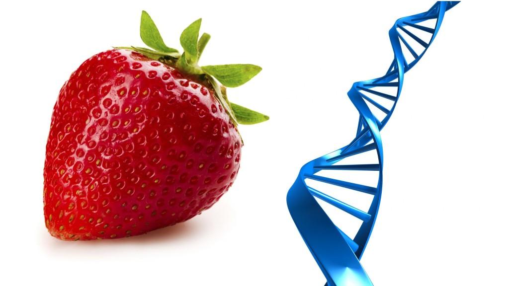 Telomerii si alimentatia