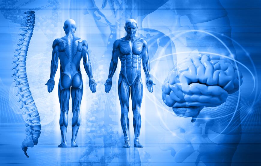 rolul telomerilor in organism
