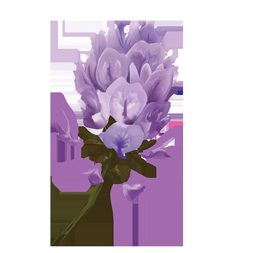 astragalusflower