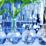 Plante cu efecte puternice asupra telomerilor