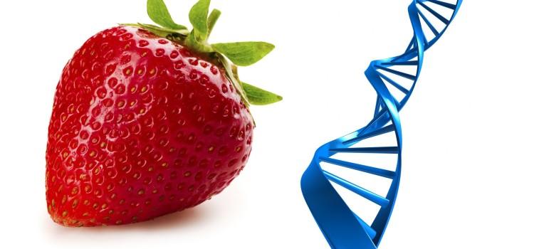 Telomerii și alimentația